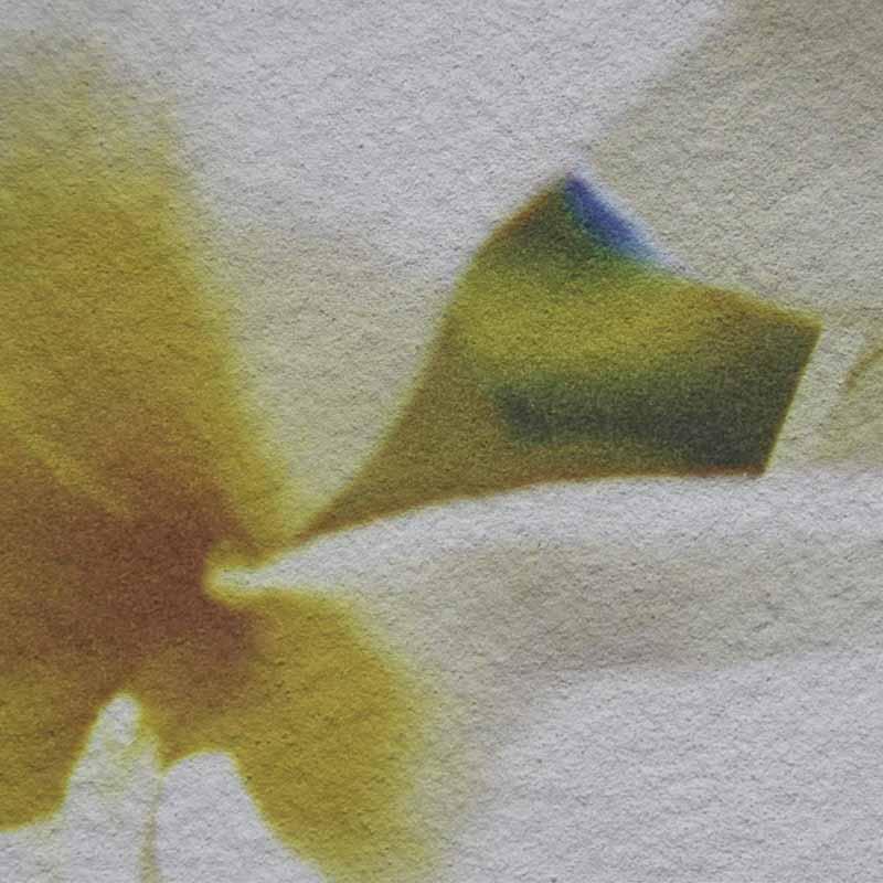 Модульная картина Династия 06-015-01 Солнечные цветы